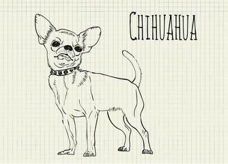 drawing on notebook sheet Chihuahua