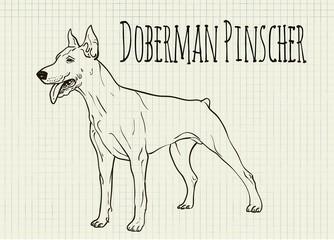 drawing on notebook sheet Doberman