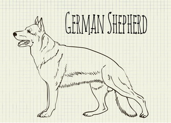 drawing on notebook sheet German Shepherd