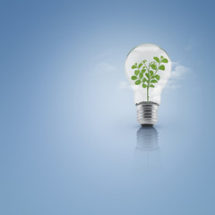 Tree leaves growing inside light bulb with soil over cloud and b