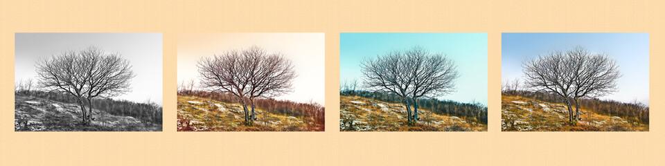 Fine art scene. A single tree in different ways.