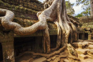 Tree roots over the ruins of Ta Prohm temple at Angkor, Siem Reap, Cambodia.
