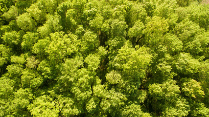 Top view of green forest on Spring day