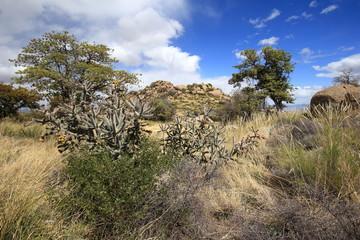 Oracle Desert Hill