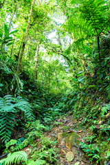 Path in the rainforest, Ecuador west of the Andes, Choco
