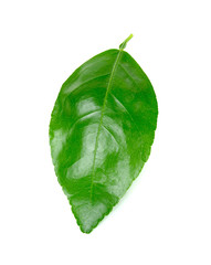 lime leaf Isolated on the white background