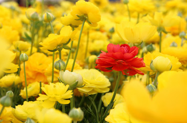 dreamy photo with low angle of spring flowers