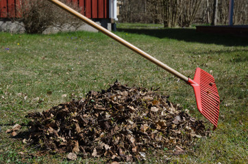 Rake and a heap of dry leaves in a garden