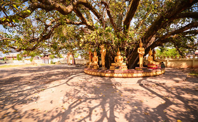 Image of Buddha under the tree in laos