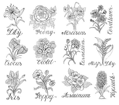 Set with hand drawn flowers and calligraphy text