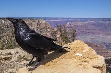 The Grand Canyon National Park Arizona USA