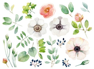 Set of floral elements on white background