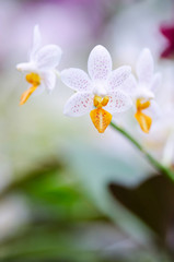 Close-up of white orchid. Bouquet of flowers orchids.
