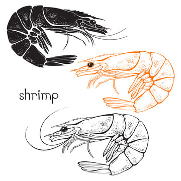 Shrimps, isolated elements for design on a white background. Vector illustration.