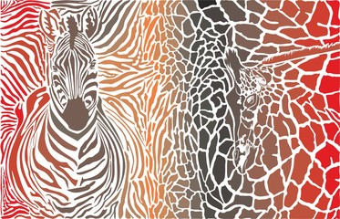Animal background of zebra and giraffe