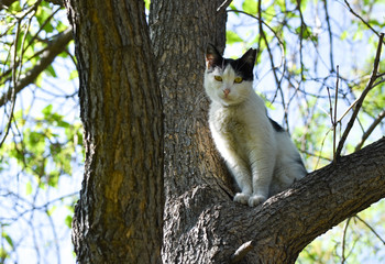 Cat standing on tree isolated