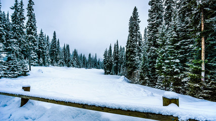 Wall Mural - Deep snow pack and snow covered trees at the village of Sun Peaks in the Shuswap Highlands in central British Columbia