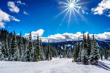 Wall Mural - Ski slopes, blue skies and bright sun at Sun Peaks in the Shuswap Highlands in central British Columbia