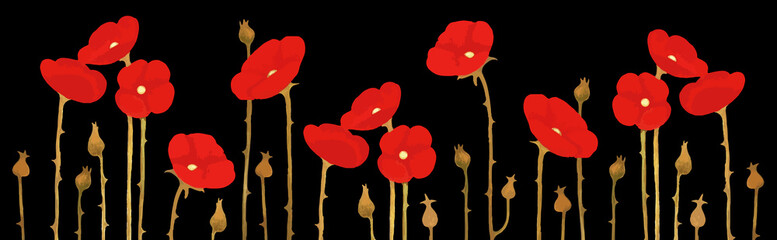 Panorama of blossoming red poppies on black background