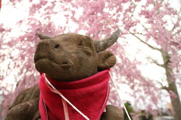 牛の石像と桜