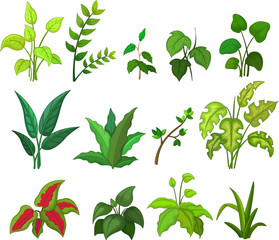 collection of leafs cartoon