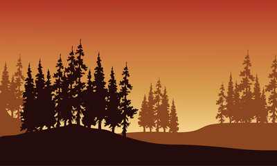 Silhouette of spruce in hills