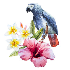 Watercolor hibiscus flower and parrot