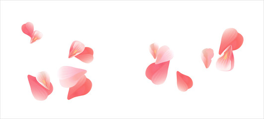 Sakura flying petals isolated on white background. Vector