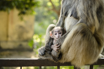 monkey in mom's arms