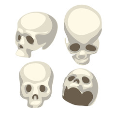 White human skull from four different angles