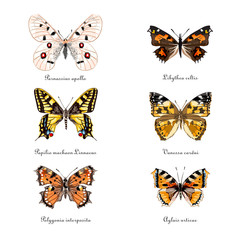 Russian butterflies. Set of butterflies. Hand drawn vector illustration.