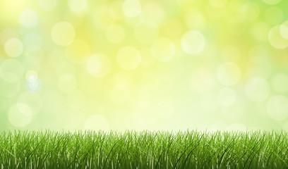 Gras / Hintergrund / Bokeh