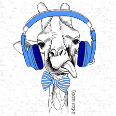 Picture of portrait of a giraffe in the headphones and bow. Vector illustration.