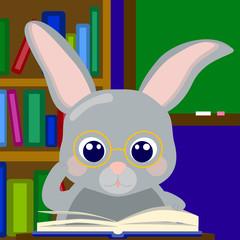 Rabbit scholar in library