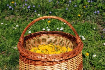 basket full of yellow dandelion flowers