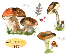 set mushrooms. Watercolor drawing. Can be used for printing and design.