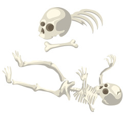 Human skeleton and bones different parts of body
