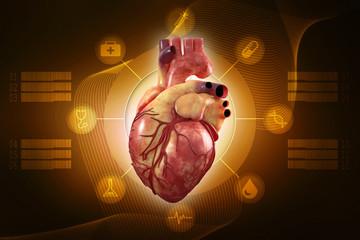 Rendering Anatomy of Human Heart