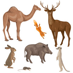 Animals of forest, desert and steppe zones.