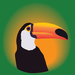 Head of a Toucan on a green background