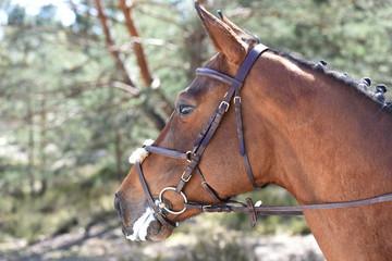 jeune femme à cheval