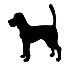 Silhouette of beagle isolated on white background.