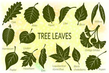 Pictograms Set, Tree Leaves, Oak, Willow, Liquidambar, Hawthorn, Poplar, Aspen, Hazel, Ginkgo Biloba, Elm, Birch, Alder, Linden, Hornbeam, Chokeberry and Lilac. Eps10, Contains Transparencies. Vector