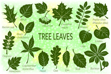 Pictograms Tree Leaves, Dogrose, Oak, Iberian Oak, Maple, Liquidambar, Hawthorn, Poplar Silver, Hazel, Elm, Birch, Linden, Rowan, Chestnut, Buckeye, Viburnum, Chokeberry, Lilac and Teak. Eps10 Vector