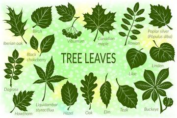 Pictograms Tree Leaves, Dogrose, Oak, Iberian Oak, Maple, Liquidambar, Hawthorn, Poplar Silver, Hazel, Elm, Birch, Linden, Rowan, Chestnut, Buckeye, Viburnum, Chokeberry, Lilac and Teak. Eps10 Vector