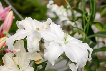 white flower in park 4608