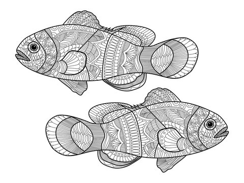 Clown fish coloring book for adults vector