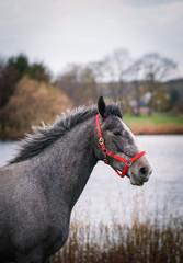 Temparamentvolles Pferd vor einem Teich