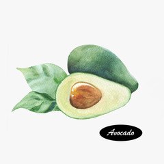 Hand drawn watercolor painting of  avocado