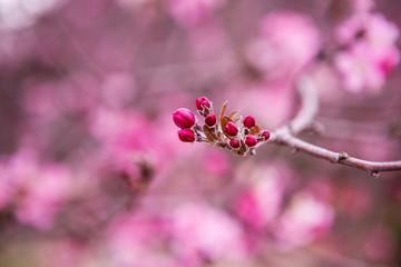 floral spring background branch